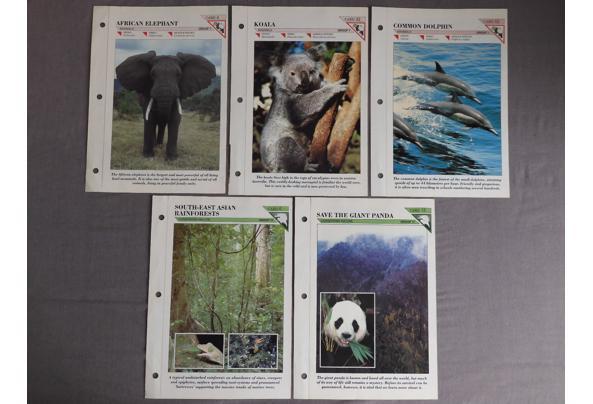 Dieren spulletjes (zoals posters en kaarten) - DSCN0404_637581837592916181