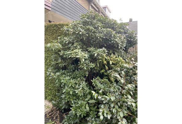 Gratis diverse planten & struiken - IMG_3374.JPG