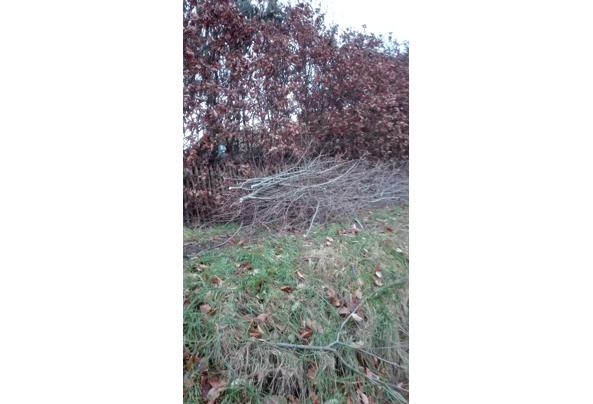 Wilgentakken, wilgentenen, wilgenhout - IMG_20210129_170646