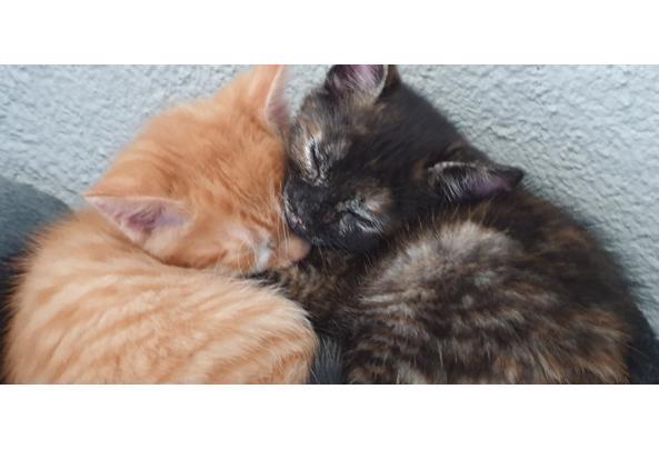 4 kittens van 7 weken  - 20210612_175855