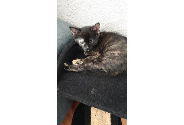 4 kittens van 7 weken  - IMG-20210612-WA0002