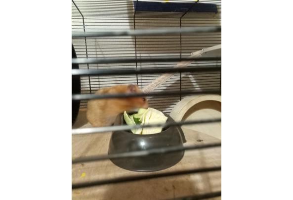 Fify De hamster. - IMG_20210319_191910