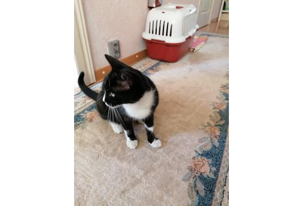Poes - IMG_20210721_174127