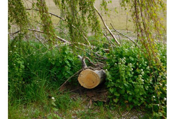 hout van gekapte boom - DSCI0594