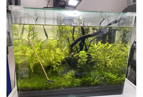Compleet aquarium  - image