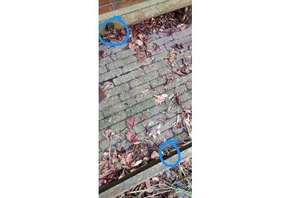 hardhouten tuinbankje - IMG_20201226_155628__01