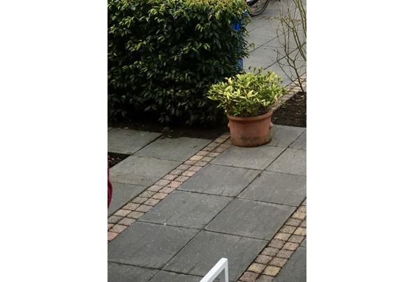 Mooie klinkers (750 stuks), betonnen randen (3,5 stuks) en houten pallet - F271C4F9-0AC8-4ACD-B96A-40AE4E7A1E17