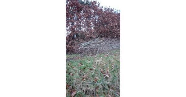 Wilgentakken, wilgentenen, wilgenhout