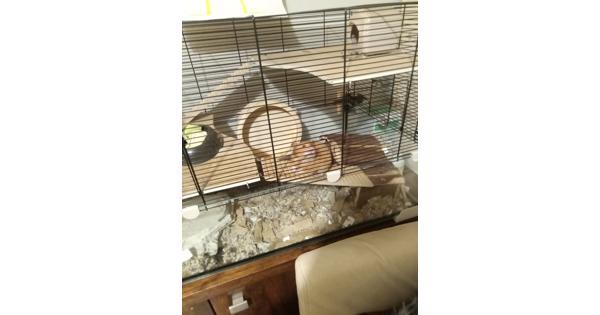 Fify De hamster.