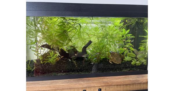 Compleet aquarium